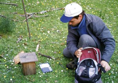 Trabajo de campo con los nidales de papamoscas cerrojillo (foto: Isabel Moreno).
