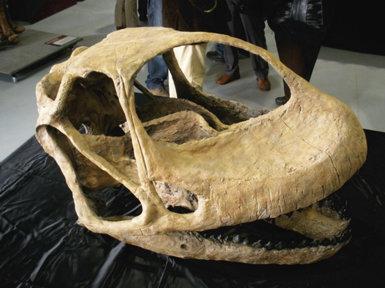 Reconstrucción del cráneo de Turiasaurus riodevensis presentada en Dinópolis (Teruel) el pasado 3 de abril (foto: R. Serra).