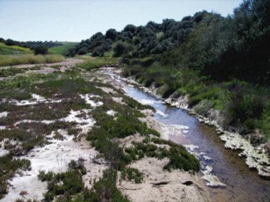 Un cauce fluvial, en este caso el arroyo Mascardó, salino, en el término municipal de Las Cabezas de San Juan (Sevilla).