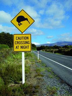 Señal de tráfico que alerta sobre el paso nocturno de kiwis.  En las carreteras neozelandesas es fácil tropezarse con este tipo de carteles, pero ver a un kiwi en libertad es mucho más difícil.