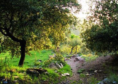 Encinares en la Loma del Maitena, dentro del Parque Natural de Sierra Nevada (Granada), zona donde habita una variada comunidad de depredadores capaz de presionar sobre los nidos de mirlo (foto: Juan Diego Ibáñez).