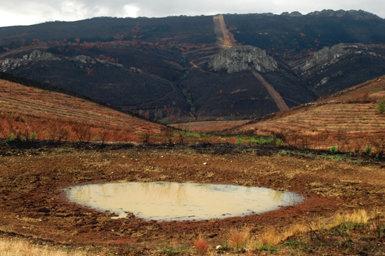 Un incendio devastó el entorno de esta charca del término municipal de Cañamero (Cáceres) en julio de 2005, como puede comprobarse en esta fotografía tomada tres meses después. La zona era hábitat de varias especies de anfibios, entre ellas el sapo de espuelas (fotos: Enrique Ayllón).
