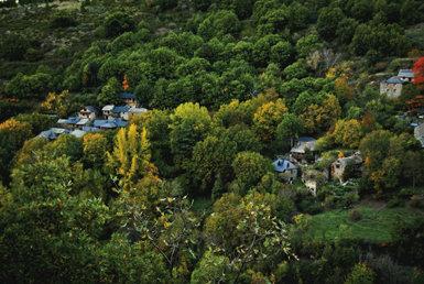 Castaños, nogales y cerezos forman una espesa arboleda en torno a la aldea de Palacios de Compludo.