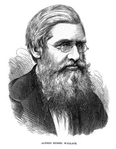Alfred Russell Wallace:  el naturalista a la sombra de Darwin