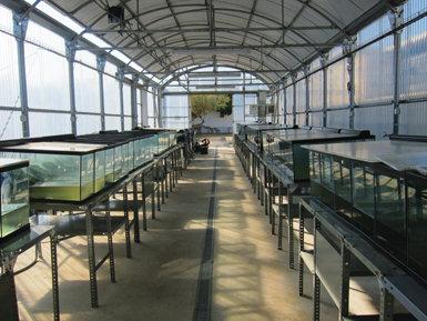 Instalaciones para la crianza de los galápagos europeos que nacen en el Centro de Fauna Salvaje del Canal Vell, en el Parque Natural del Delta del Ebro. Foto: Laura Fortuño.