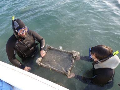 Técnicos del Consorci de l'Estany depositan una caja-bandeja con sedimento en el fondo del lago, donde se van a sembrar centenares de juveniles de náyades.