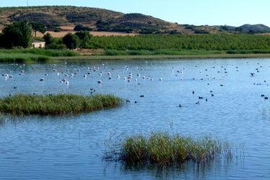 Panorámica de la laguna de Horna, en el término municipal de Chinchilla de Montearagón (Albacete), donde se ha autorizado la caza a pesar de ser hábitat de la malvasía cabeciblanca.