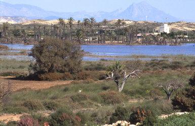 Fondet de la Senieta inundado, zona del ámbito del Paraje Natural Municipal del Clot de Galvany, en Elche (Alicante), donde se pretende construir un hotel (foto: Miguel Ángel Pavón).