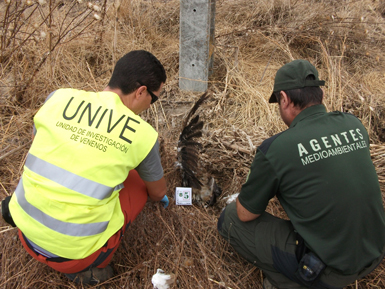 Miembros de la Unidad de Investigación contra el Veneno (Unive) de Castilla-La Mancha examinan el cadáver de una rapaz (foto: SEO/BirdLife).