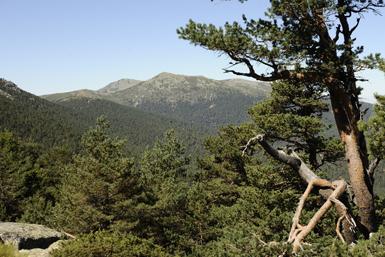 Panorámica del Parque Nacional de la Sierra de Guadarrama (foto: José María Pérez de Ayala / Ceneam).