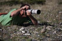 Un naturalista frente a un chorlito carambolo en migración post-nupcial en el Parque Natural del Montseny (foto: Martí Franch).