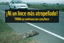 Esta petición on-line sigue abierta. Accede a ella en www.wwfenaccion.com/lince y sigue la campaña en Twitter con #SalvaLince