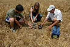 Dos naturalistas y un agricultor colaboran en el rescate de varios pollos de aguilucho cenizo en Tafalla (Navarra). Foto: Gurelur.
