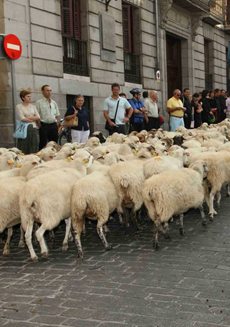 Un grupo de ovejas trashumantes atraviesa las calles del centro de Madrid (foto: Ayuntamiento de Madrid).