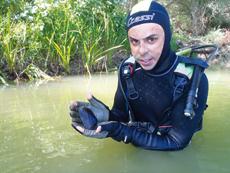 Un buceador con el ejemplar joven de Margaritifera auricularia hallado en el tramo navarro del Ebro (foto: CHE).