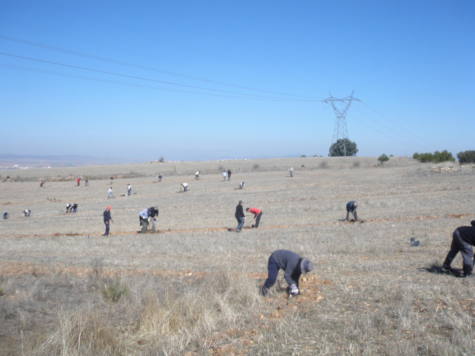 Monreal del Campo: veinte años recuperando el monte