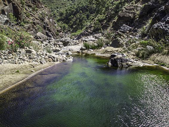 Hallada en Sierra Bermeja una nueva población de pez fraile