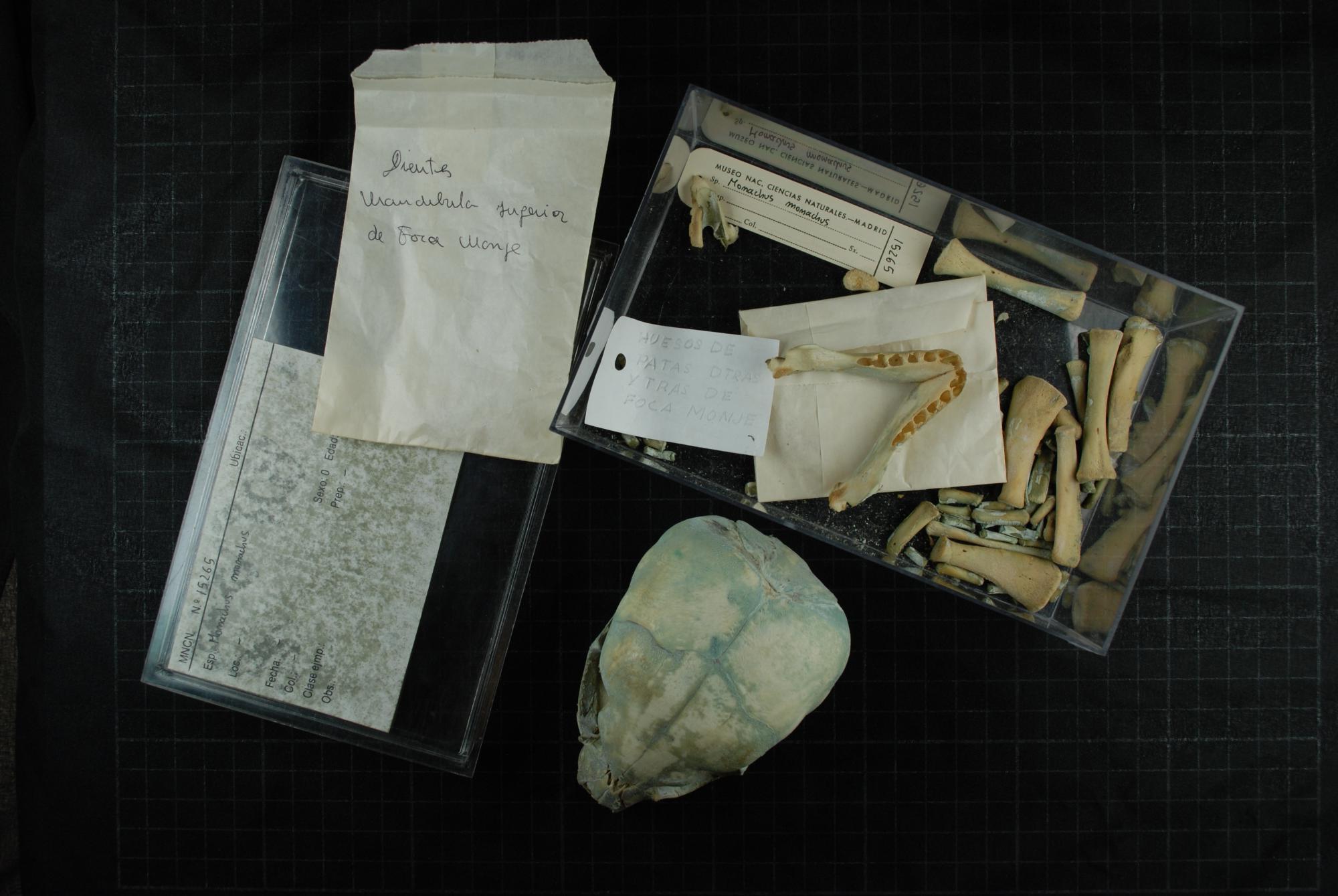 El misterio del cráneo 15265