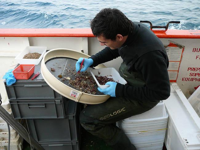 Un investigador examina muestras de algas recién extraídas del mar durante un estudio enmarcado en LIFE+ INDEMARES). Foto: IEO.