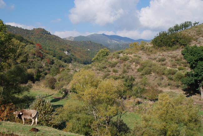 La ZEPA y el LIC de Fuentes Carrionas, con casi ochenta mil hectáreas, es el mayor espacio de la Red Natura 2000 existente en la provincia de Palencia (foto: WWF España).