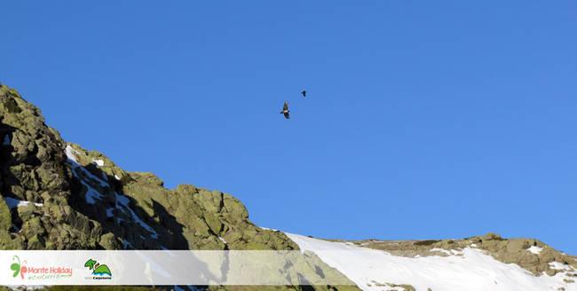 Estela, una hembra de quebrantahuesos de casi dos años de edad, sobrevuela la cresta de un circo glaciar en el valle de Lozoya (Madrid).