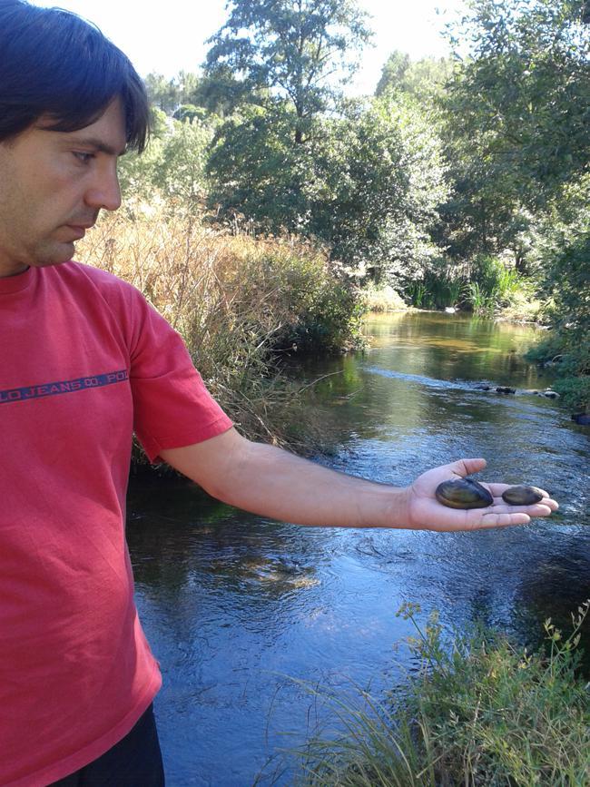 Javier Balset, naturalista dedicado a las náyades del Alto Alberche, muestra dos ejemplares que acaba de localizar de dos especies diferentes (foto: José Antonio Montero).