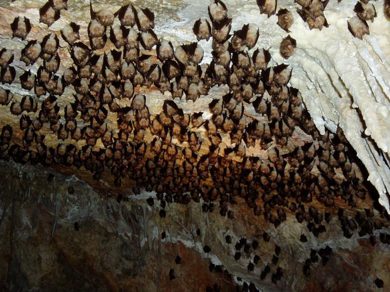 Murciélagos en España: no suponen una amenaza