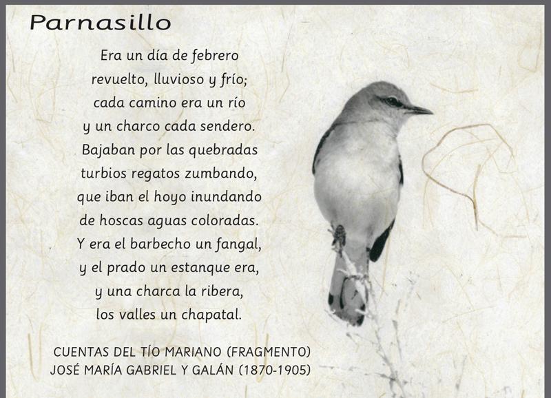 Parnasillo Febrero