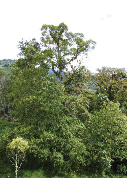 El mito de las florestas vírgenes