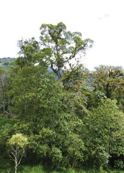 Floresta pluvial en la provincia de Napo (Ecuador). Foto: Juan Carlos Guix.