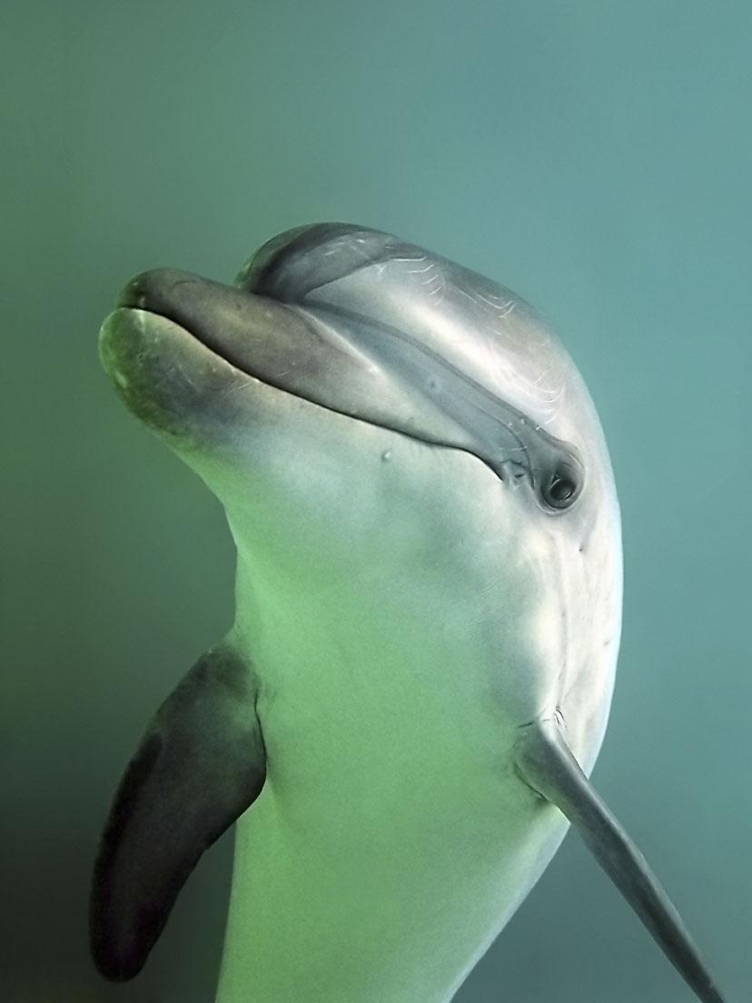 Es la hora de los cetáceos
