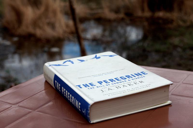 The Peregrine: una obra maestra de la literatura ornitológica