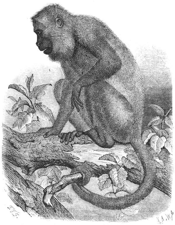 Nuevas evidencias de que los primates americanos tienen su origen en África