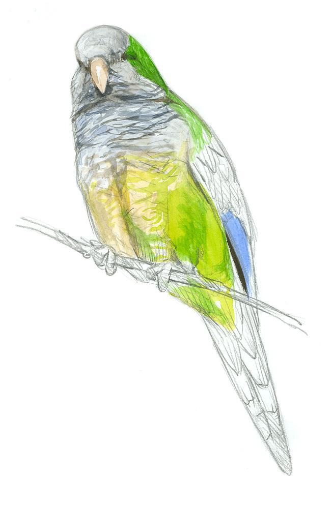 ¿Vives en una ciudad y observas aves? Te interesa #AquíCotorra