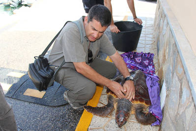 Momento del desembarco de una tortuga boba recuperada por un pescador recreativo en julio de 2013 (Foto: Club Náutico Marina Internacional).