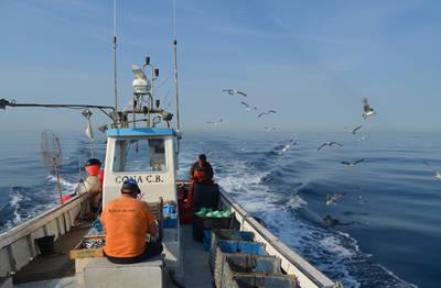 Un palangrero faena en aguas mediterráneas, rodeado de aves marinas (foto: Universidad de Barcelona).