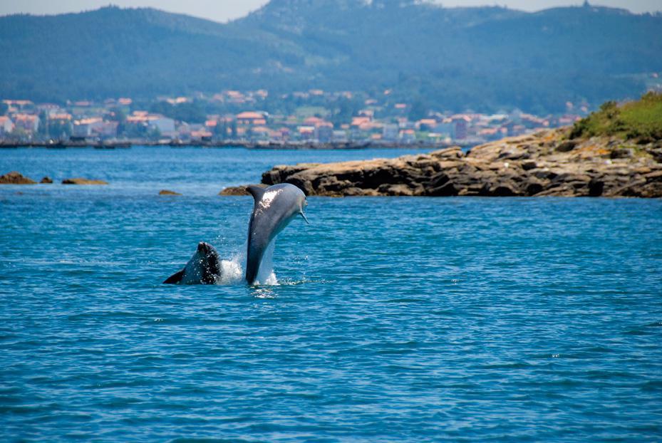 Cetáceos con dientes en Galicia y norte de Portugal: relaciones de vecinos