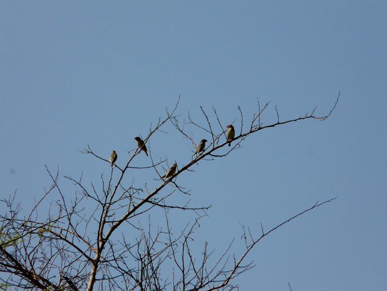 Las aves de Tami, un lugar recóndito en un pequeño país africano