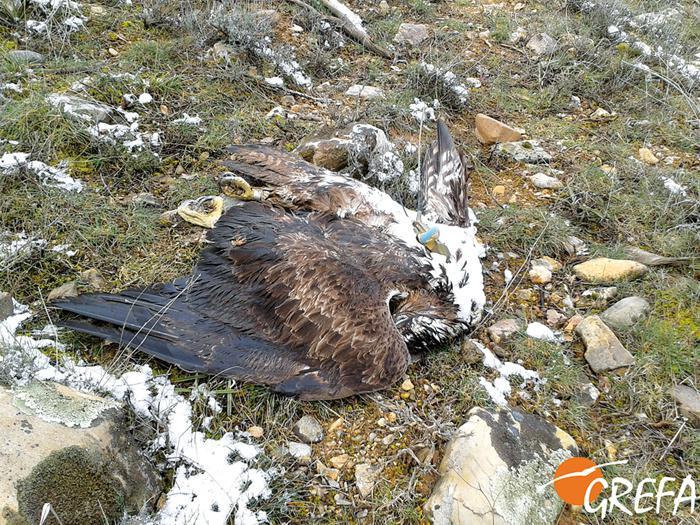 Sanción a cotos de Guadalajara donde murió fauna por veneno