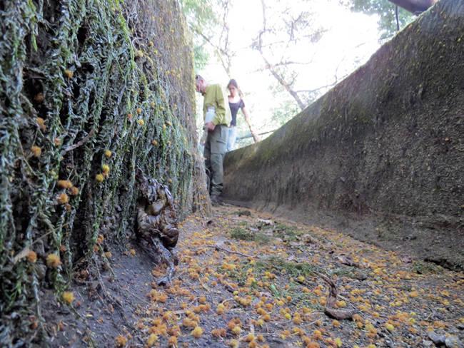 Mientras naturalistas de Charcas con Vida recorren un canal de riego de Pontecaldelas (Pontevedra) para rescatar la fauna atrapada en él, dos sapos comunes intentan salir del lugar (foto: Ramsés Pérez).