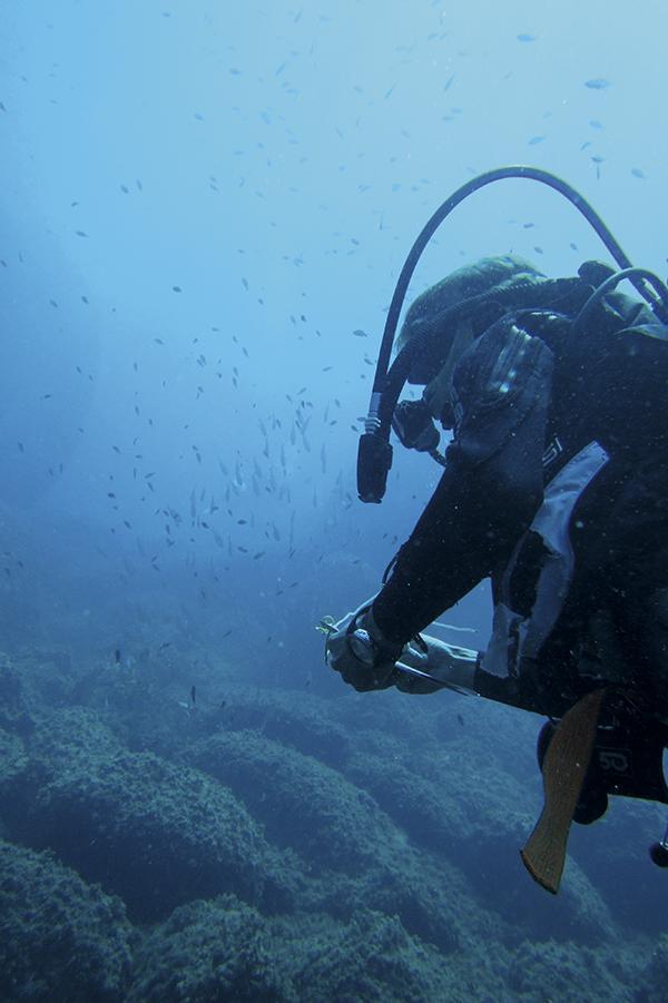Un buceador recopila información sobre especies marinas en el Mediterráneo (foto: Mar Otero / UICN-Med).