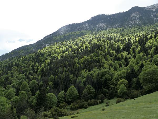 Una tala amenaza un abetal pirenaico protegido por la UE