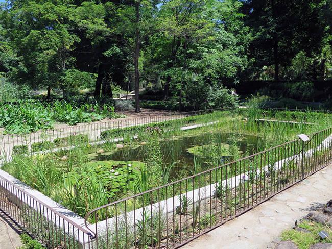 Aspecto del nuevo estanque de flora acuática del Real Jardín Botánico (foto: RJB).