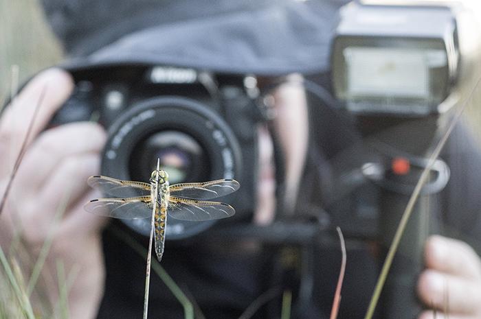 Las libélulas de Galicia como indicadores ambientales
