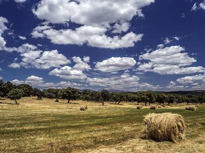 Cultivo cerealista cosechado, flanqueado al fondo por una dehesa de encinas, en Parrillas (Toledo). Foto: Niko López.