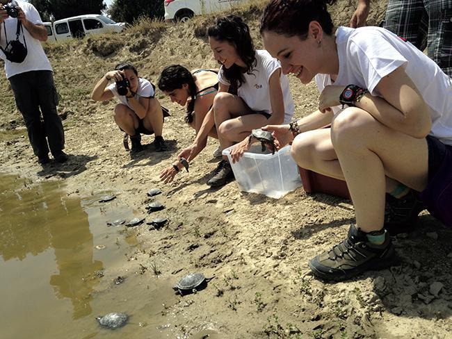 GREFA libera cuarenta galápagos europeos criados en cautividad