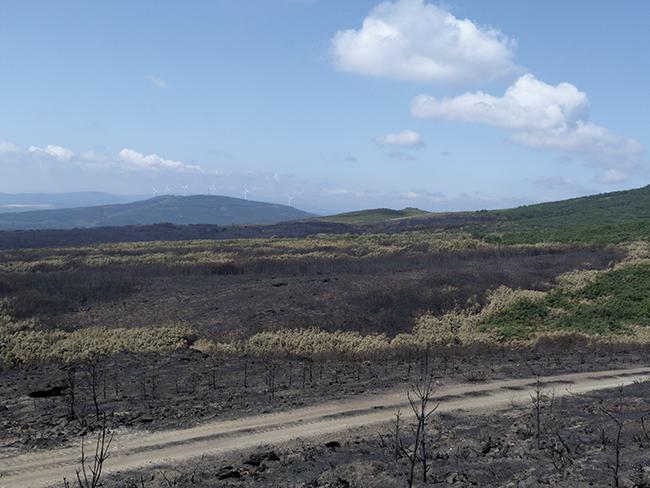 El fuego arrasa el santuario mediterráneo del urogallo