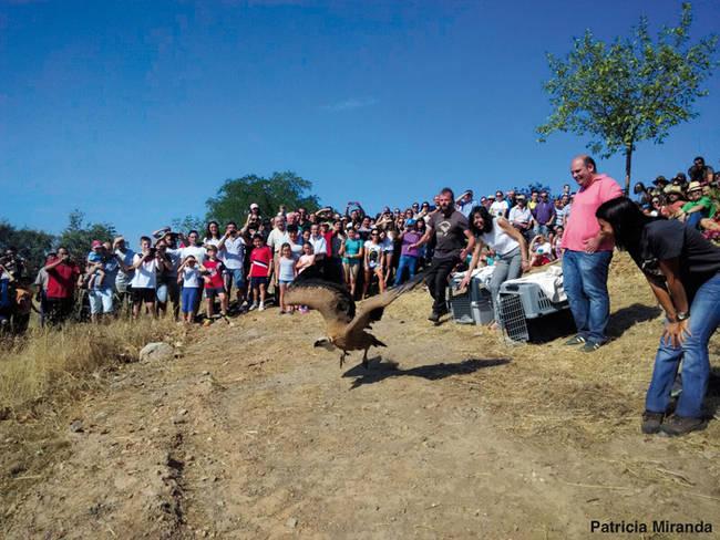 Suelta de un buitre leonado en las Dehesas del Suroeste de Badajoz, para celebrar el Día Internacional de los Buitres (foto: Patricia Miranda).