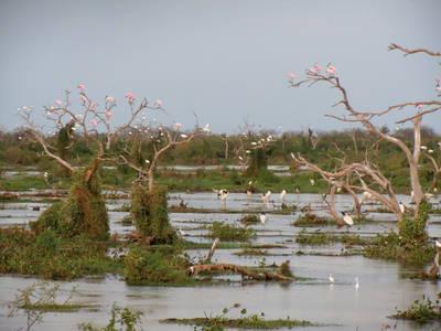 Paisaje característico de árboles muertos y aves acuáticas en el Bañado La Estrella (Argentina). Foto: Ana Íñigo.