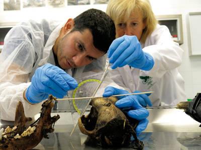 Antonio Ruiz García e Irene Zorrilla, dos de los autores, realizan pruebas forenses al cadáver de un carnívoro envenenado (foto: CAD / Junta de Andalucía).